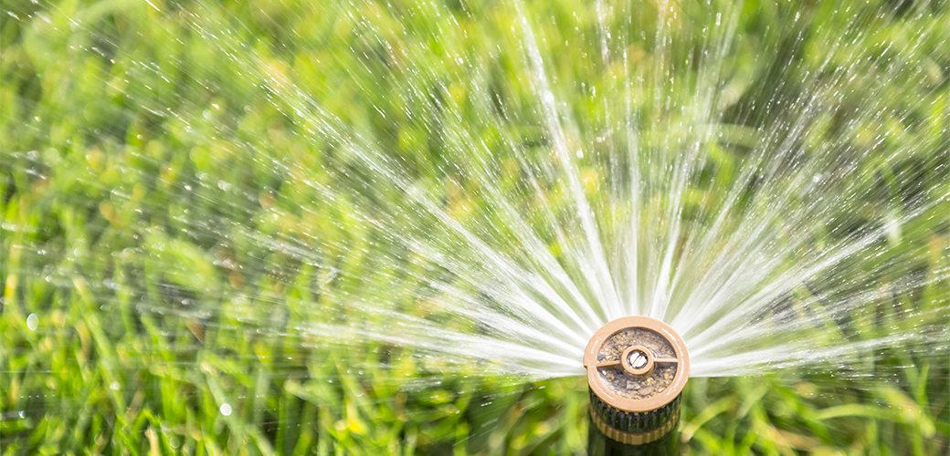 watering3